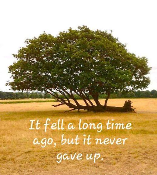 it fell a long time ago but it never gave up