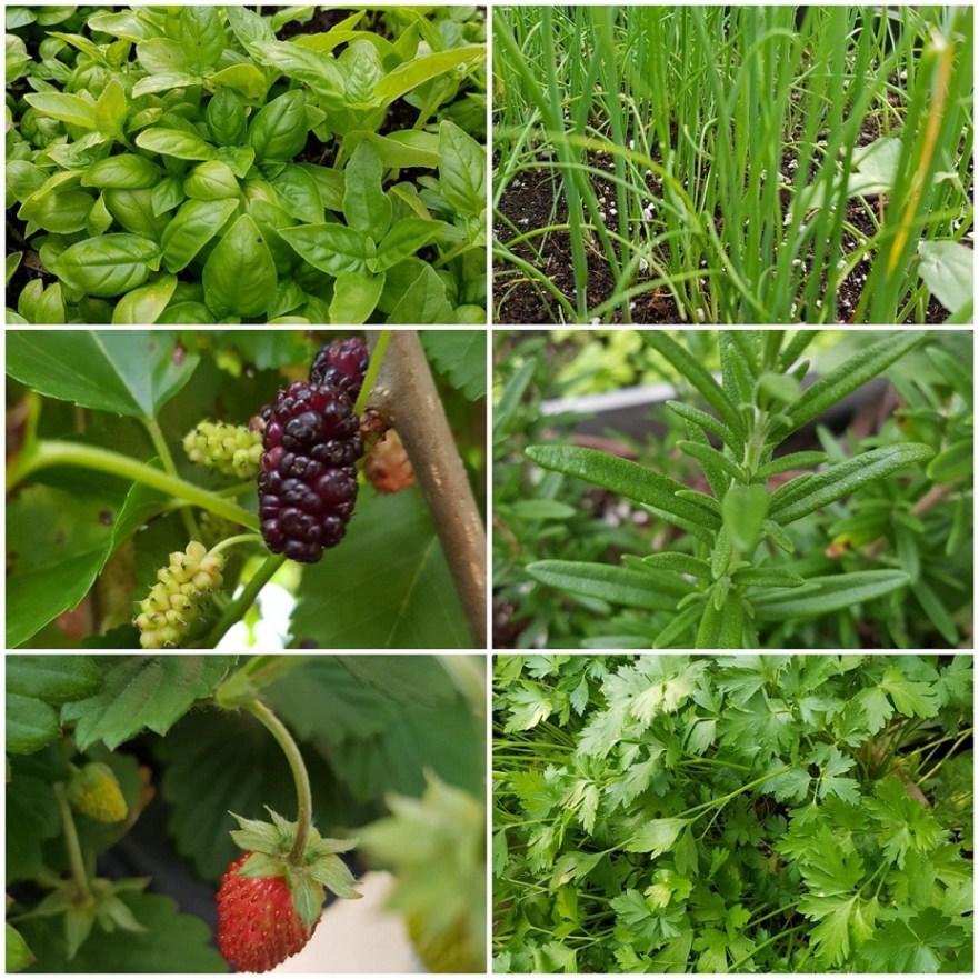Ontario garden