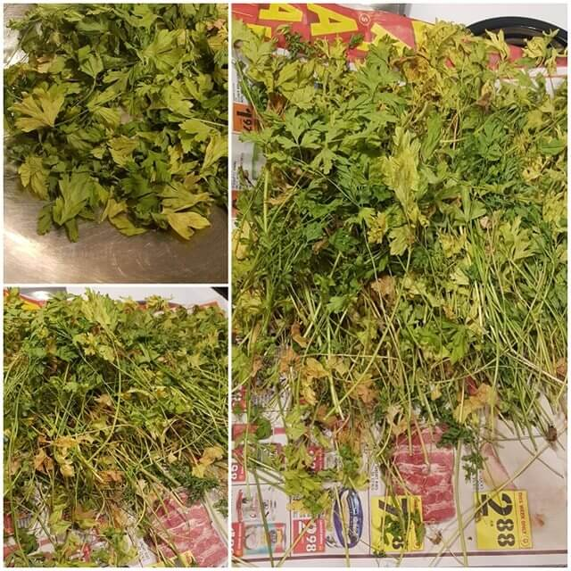 drying parsley