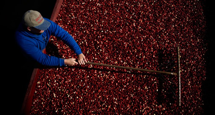 Ocean Spray Canada Harvest