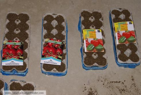 Seed Trays for Frugal Garden