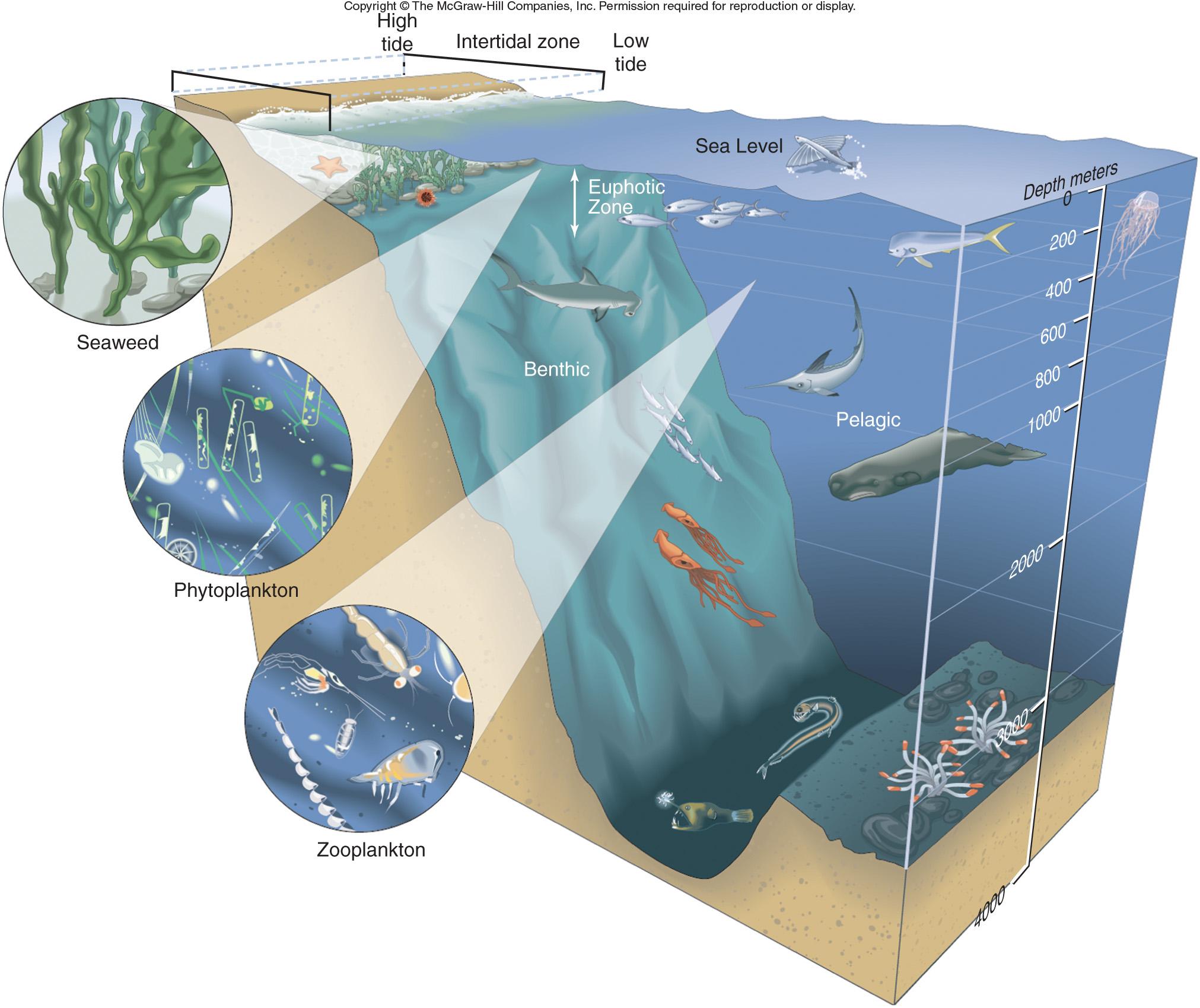 Adaptation In The Ocean Canadiancatfish