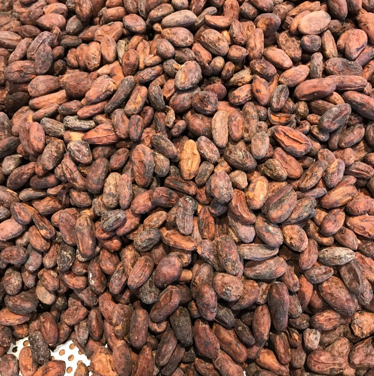 cacao beans pdb 2018