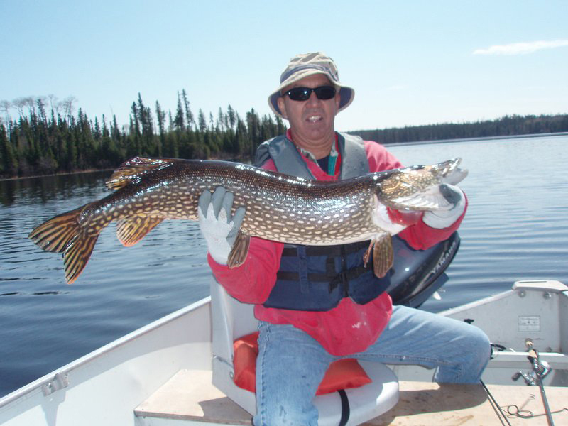 Trophy northern pike, Canadian Fly In Fishing