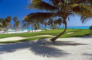 Image of palm trees at Punta Espada