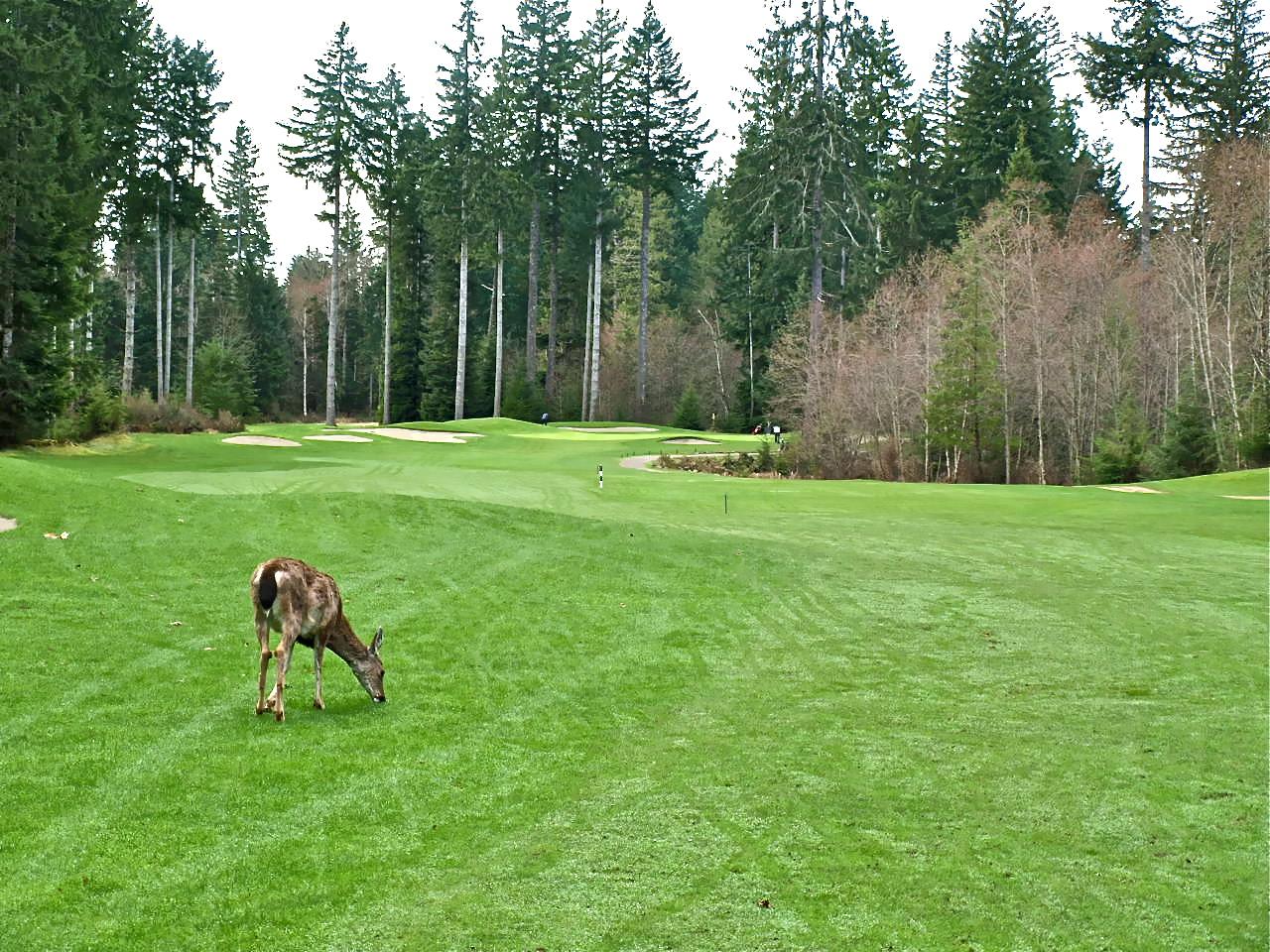 Storey Creek Golf Club | CanadianGolfer com
