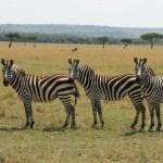 Go Wild on a Kenya Golf Safari
