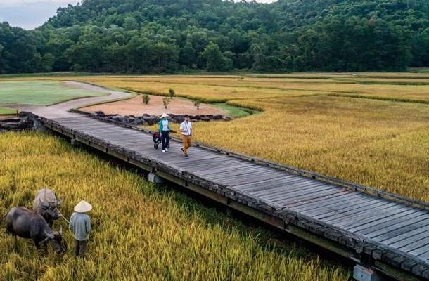 Laguna Lang Co golf course rice paddies and water buffalo (Image: Laguna Lang Co)