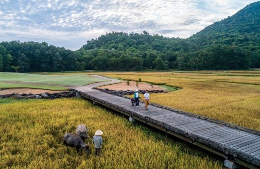 Laguna Lang Co golf course in Vietnam uses water buffalo to groom rice paddies that are part of the golf course. (Image: Laguna Lang Co golf course)