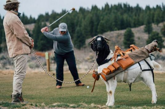 Golf with a goat caddy at Silvies Valley Ranch, Oregon