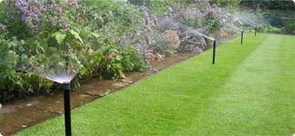 low maintenance landscaping