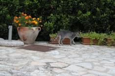 One of the farm cats at Agriturismo Tarantola. Photo: CanadianKate