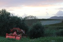 This is not a simply a tourist operation. It is definitely a working farm. Agriturismo Tarantola. Photo CanadianKate