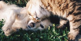 3 Ways Your Home Will Benefit From Having A Pet