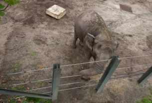 L'éléphant Happy au zoo du Brox.