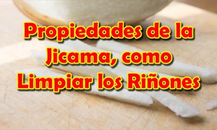 Propiedades de la Jicama o Beneficios de la Jicama, como Limpiar los Riñones