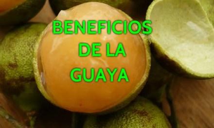 Que es la Huaya Fruta, Propiedades de la Huaya Fruta que cura el cancer o Fruta para el Cancer