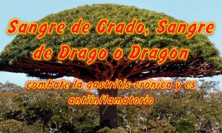 Sangre de Grado, Sangre de Drago o Dragon, combate la Gastritis Crónica y es Antiinflamatorio