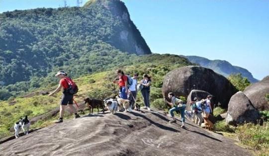 dog-trekking-canal-de-estimacao