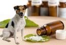 Resultados da homeopatia no tratamento dos animais