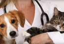 Canal de Estimação traz conteúdo exclusivo para veterinários