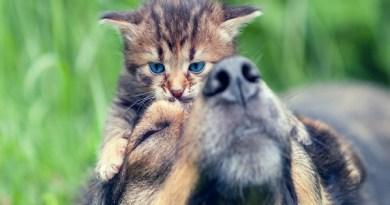 No Dia Mundial dos Animais há o que se comemorar?