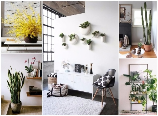 Decorar con plantas naturales 30 ideas ecol gicas para for Como decorar mi living con poca plata