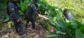 Fiscalía  búsca a jóvenes desaparecidos en comuna 13 de Medellín.