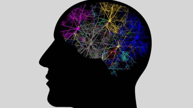 neuropixeles cerebro