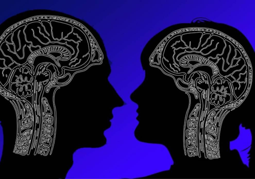cerebro hombre o mujer diferencias