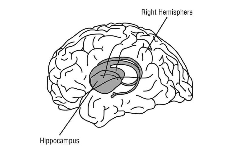 hipocampo historias