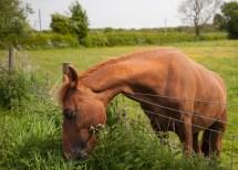 What a splendid horse...