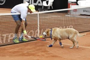 Perros recogepelotas Sao Paulo