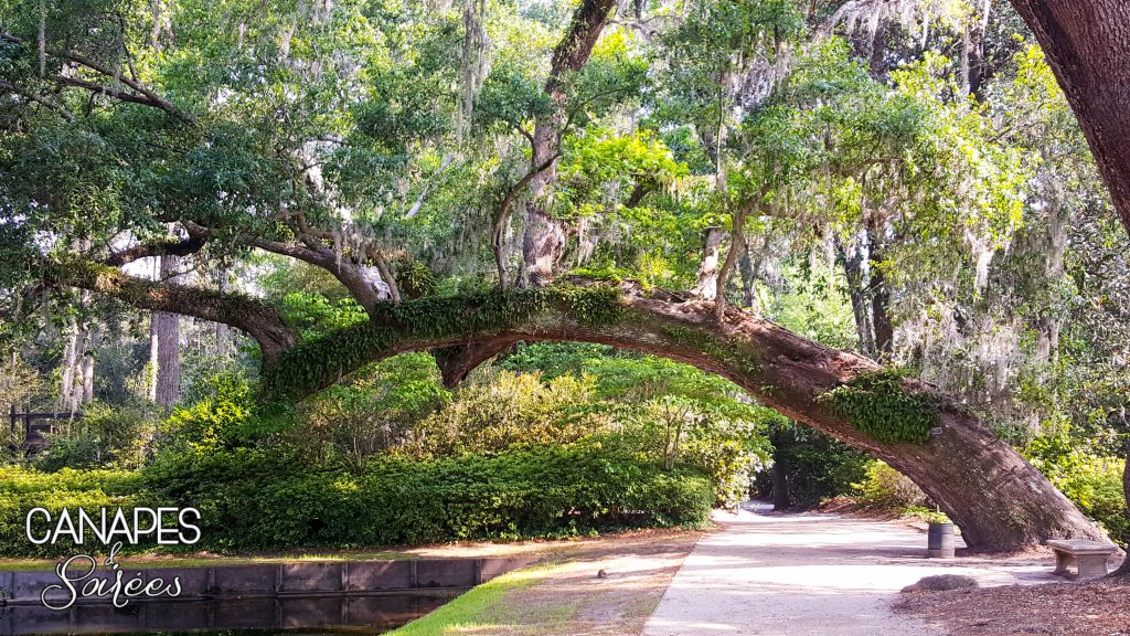 Middleton Place Trees And Pond
