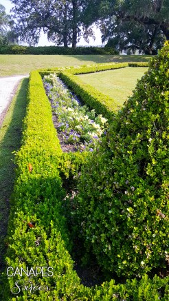 Middleton Place Manicured Garden