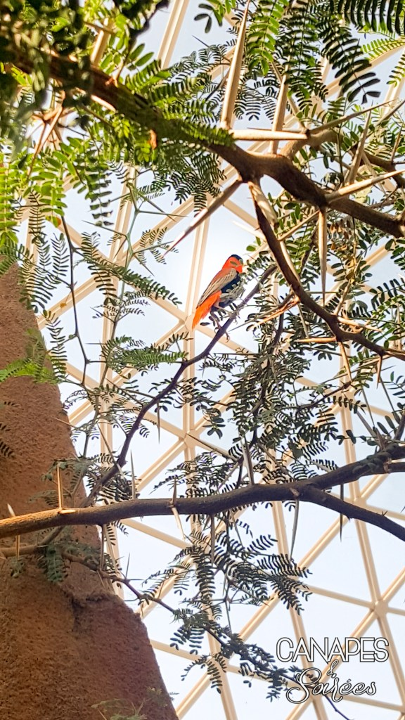 Beautiful orange bird at The Henry Doorly Zoo in Omaha