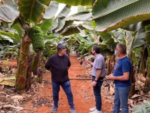 Fuerteventura pone en valor la explotación de productos agrícolas innovadores para diversificar el sector