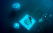 Jardin de Nemo (10)