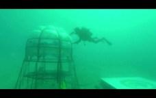 Jardin de Nemo (13)