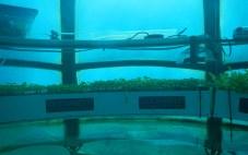 Jardin de Nemo (15)