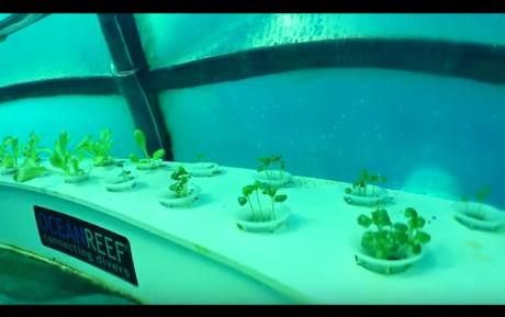 Jardin de Nemo (17)