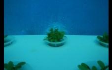 Jardin de Nemo (5)