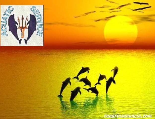 Safari de cetáceos
