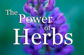 power of herbs