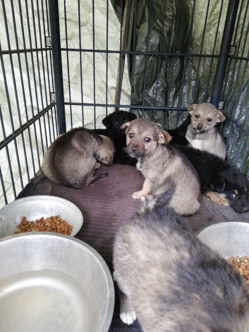 Heldin der Woche; eine Tierärztin hilft ehrenamtlich in Rumänien