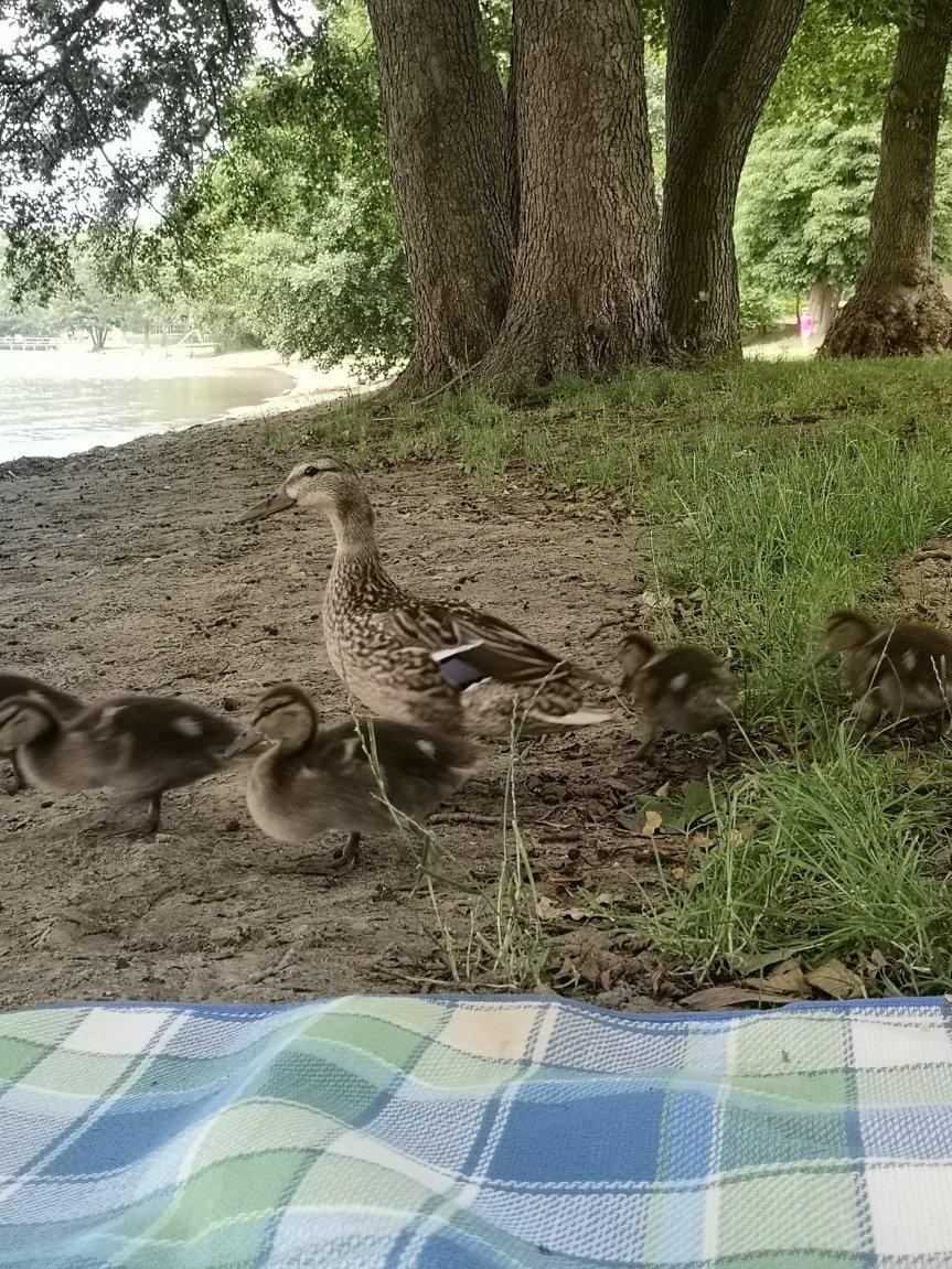 Von Zeit für mich, Zeit am See und vielen Enten; unser Wochenende