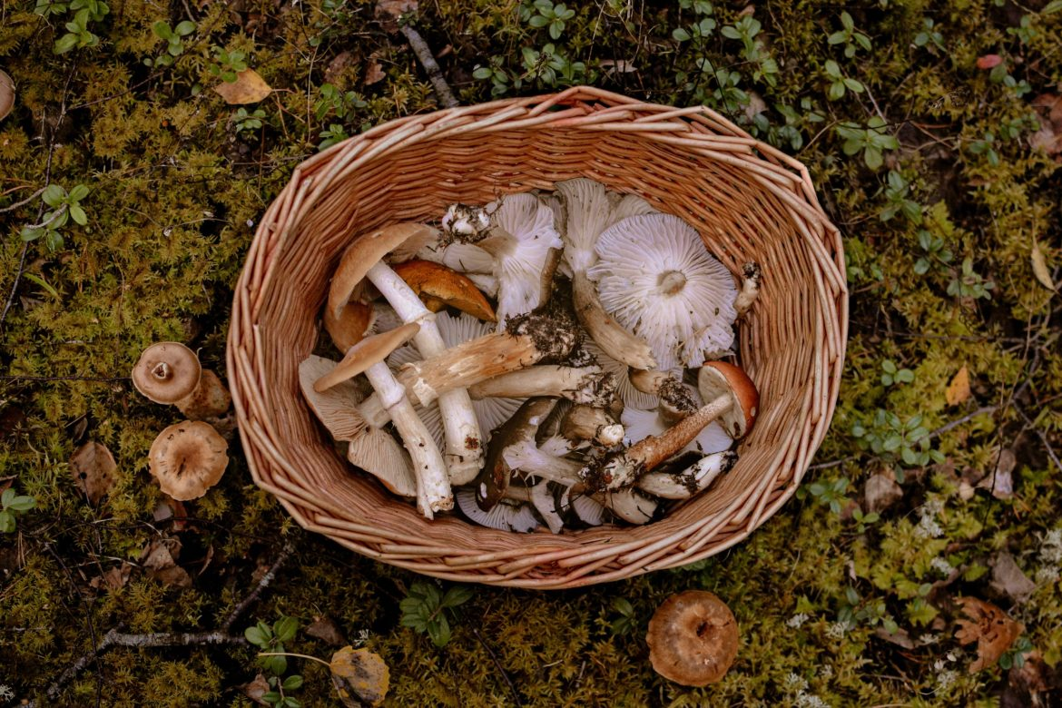 How to use medicinal mushrooms as cancer treatment