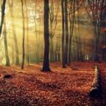 Le Quatre-Saisons - automne