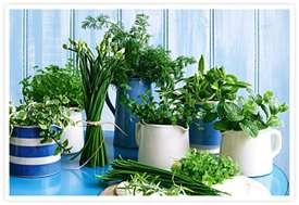 Using herbs for healing
