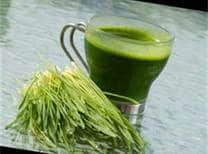 healing cancer with wheat grass
